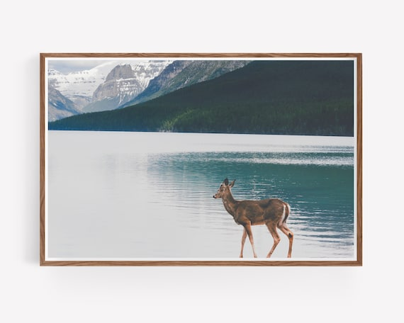 """Bowman Lake Visitor"""