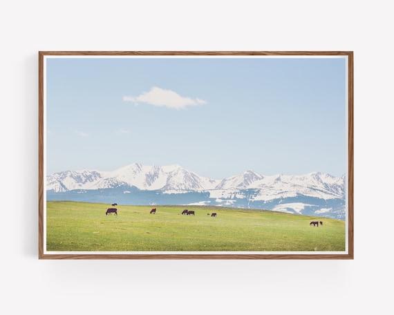 """Mountain Meadow"""