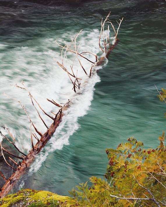 """""""Fallen"""" - landscape photography"""