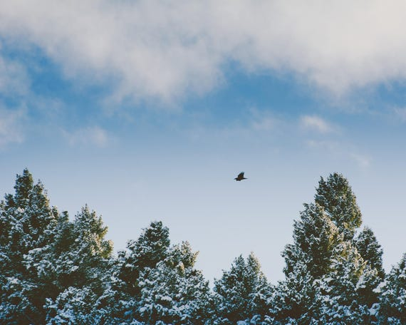 """Winter Flight"" - landscape photography"