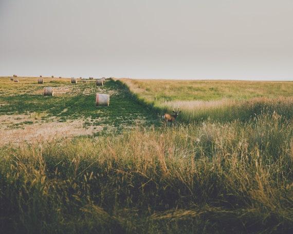 Hiding in the Fields