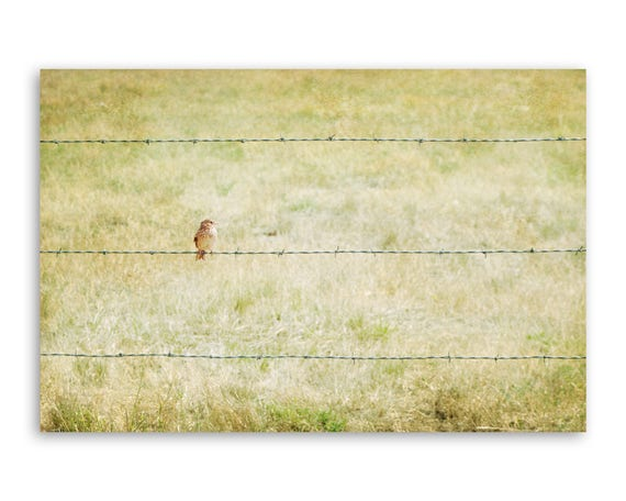 """""""Bird & Barbed Wire"""" - Photograph on canvas"""