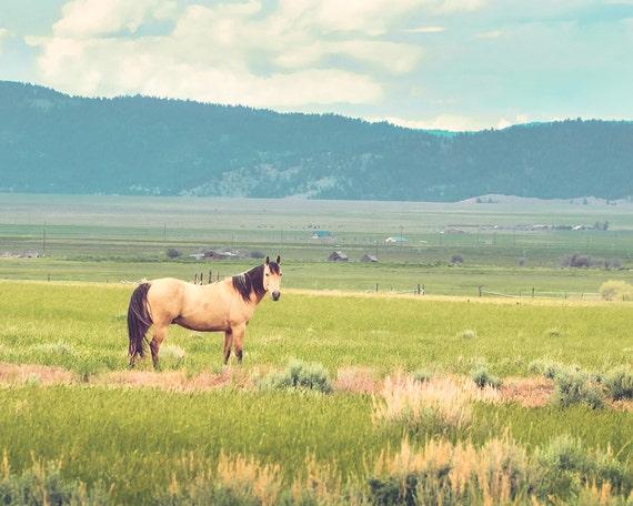 """Summer Pasture"" - landscape photography"