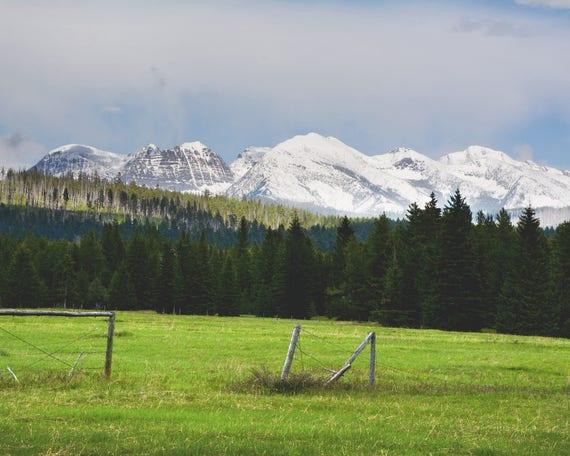 """""""Glacier Park Meadow"""" - landscape photography"""