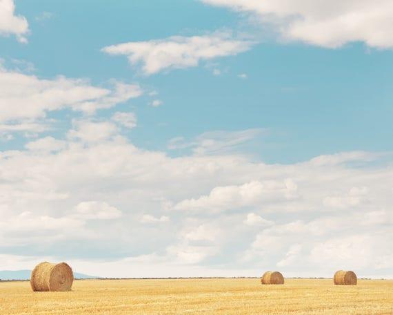 """""""Harvest Trio"""""""