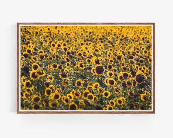 """Sunflower Fields"""