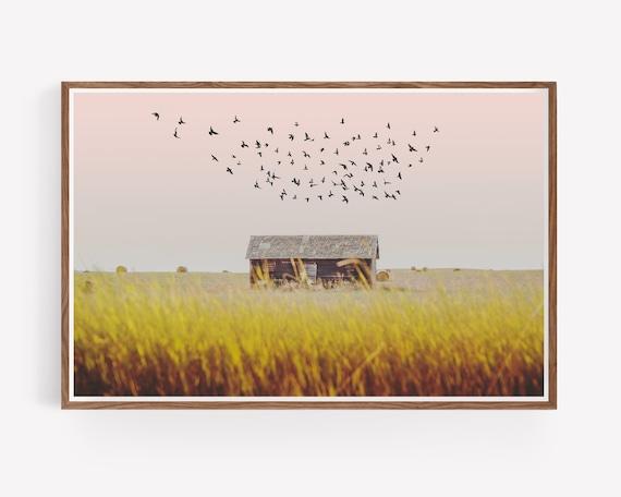 """Harvest Barn"""