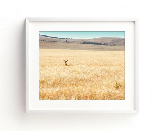 """""""Hiding in the Barley"""" - landscape photography"""