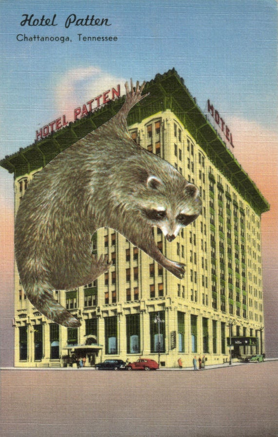 Original,Collage,Art,,Funny,Raccoon,Artwork,,Hotel,Postcard,Original Collage Art, Funny Raccoon Artwork, Hotel Postcard