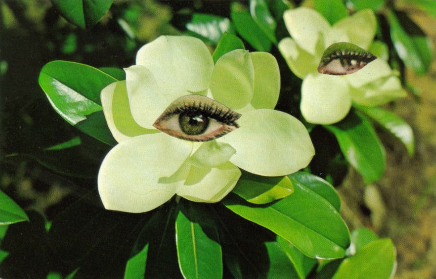 Original,Collage,Art,,Surreal,Magnolia,Flower,Artwork,Original Collage Art, Surreal Magnolia Flower Artwork