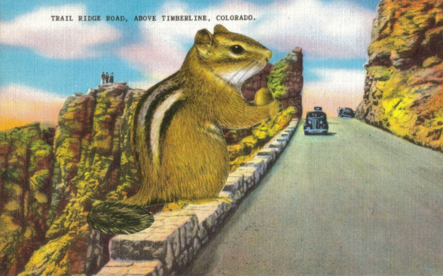 Original,Collage,Art,,Funny,Animal,Postcard,Artwork,Original Collage Art, Funny Animal Postcard Artwork
