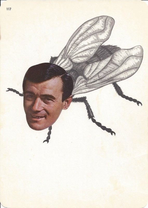 Original,Collage,Art,,Creepy,Cool,Fly,Artwork,Original Collage Art, Creepy Cool Fly Artwork