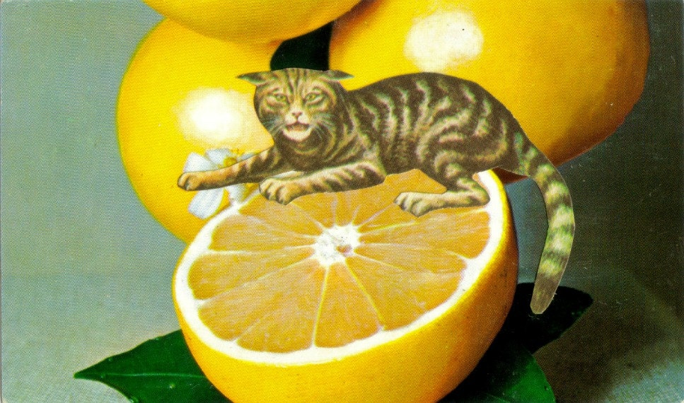 Original,Collage,Art,,Grapefruit,Artwork,,Sourpuss,Cat,Original Collage Art, Grapefruit Artwork, Sourpuss Cat