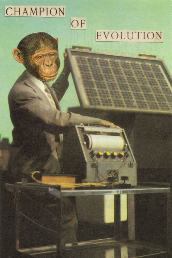 Original,Collage,Art,,Monkey,Evolution,Artwork,Original Collage Art, Monkey Evolution Artwork