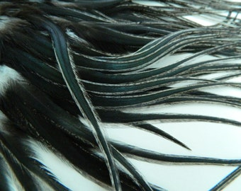 NATURAL GILDED BLACK Skinny Feather Hair Extensions, Long Golden Badger Feathers, Select Your Size