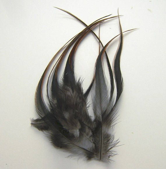 """25 BLACK GOLD TIP IRIDESCENT ROOSTER COQUE TAIL FEATHER 8/""""-10/""""L"""