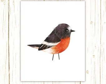 Scarlet Robin Print -- bird art -- colorful bird art by stephanie fizer coleman illustration