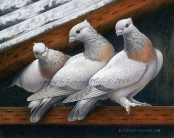 """Gold Collar Lucerne Pigeons Limited Edition 8x10"""" print """"Three Graces"""""""