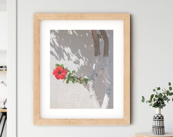 Greece nature travel photography white wall holiday red hibiscus flower fine art photograph floral art home decor