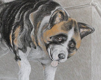 American Akita dog original art framed drawing in Conté