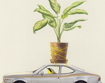 Plant Bandit. Limited edition print by Vivienne Strauss.