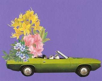 Barracuda driving bushtits. Limited edition print by Vivienne Strauss.