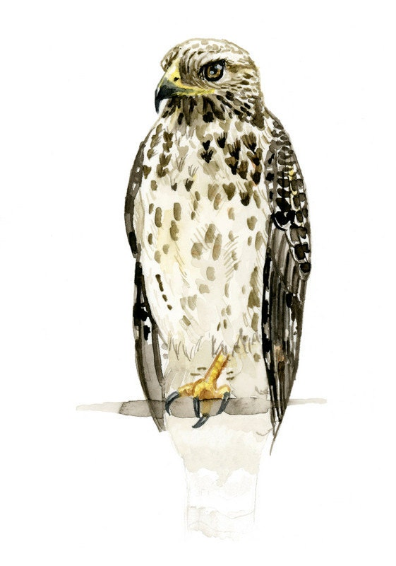 Hawk painting watercolor - photo#37