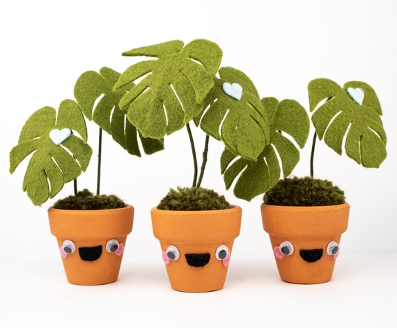Tiny monstera plant friend