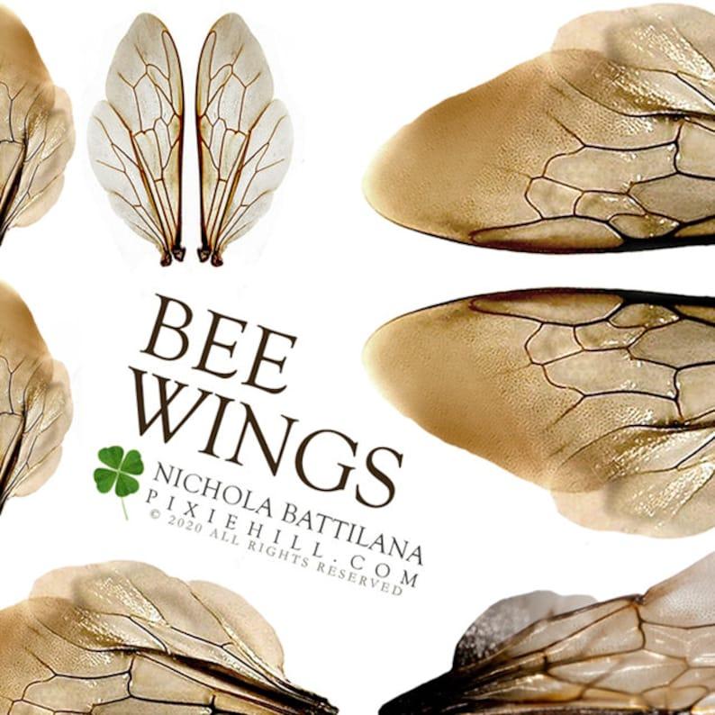 Bumblebee Wings Digital Download Collage Sheet PDF image 0