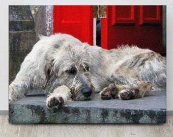 IRISH Wolfhound, Ballyseede Castle, Tralee , Co. Kerry, IRELAND Photo, Mr. Higgins, Wolfie,Dog Photography,Kingdom,Beast,RED Door,Wolf Hound