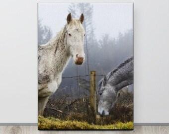 Albino Horse, Wicklow Mountains, Equine Art, Ireland Photography, Horse Art, Country Decor, Scandinavian, Desaturated, Ireland Landscape