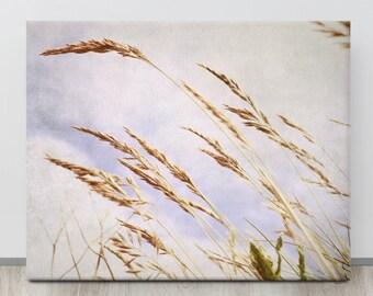 Golden Grains, Co. Waterford, IRELAND, Nature Photography, Blue Sky, Wheat Field, Summer Grass, Copper Coast, Bunmahon, Irish Flowers, Seeds