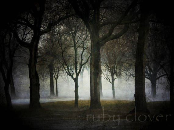 Forest Night Landscape Photography