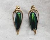 Arched Seasons - Enclosed Beetle Wing Earrings