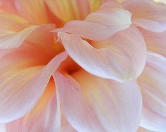 Whisper - Flower Photograph - Abstract Pale Pink Dahlia Closeup - 4x6, 5x7, 8x10, 11x14, 16x20
