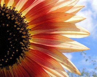 "Bestseller #12 - ""Halved"" - Flower Image - Orange Sunflower Art Photograph - Wall Decor - 4x6, 5x7, 8x10, 11x14, 16x20"