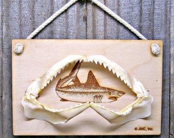 Real shark jaw | Etsy