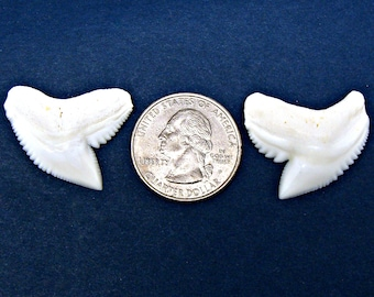 """Select 1-12 Pcs. 5//8/"""" Tooth Wholesale Shark Teeth Tooth Pendent Necklace 18/"""""""