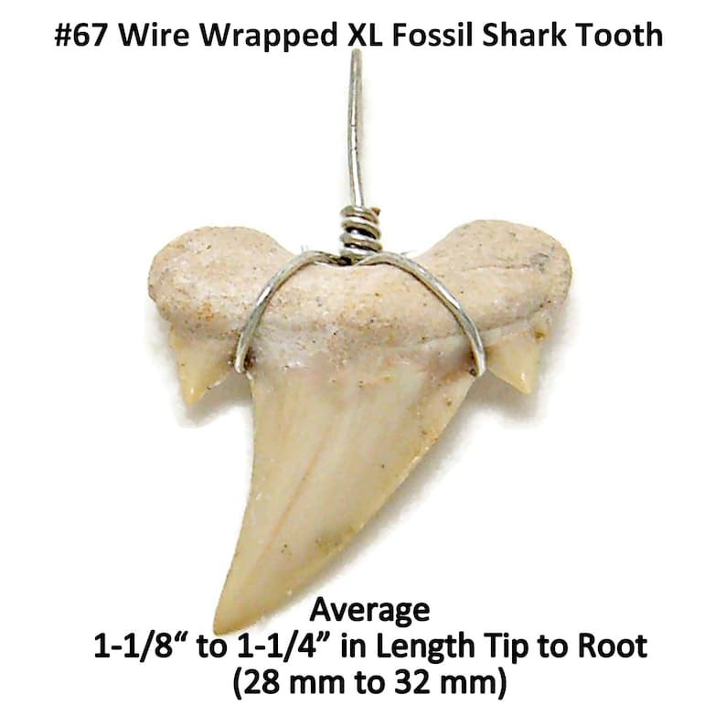 X-LARGE Fossil Shark Tooth 18 or 20 Necklace Great Sharks Teeth 8mm Coconut Bead SUP Surfer Hawaiian Beach Jewelry 7041 m xl