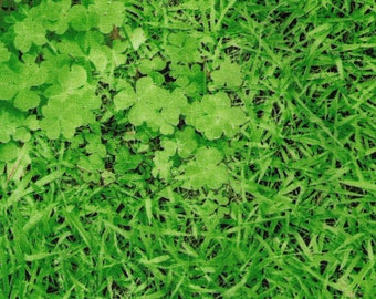 HALF YARD Kokka - Clovers and Grass - Plump Cheeks - Realistic Grass Blades, Four leaf clovers, and dirt - Japanese Imported Fabric