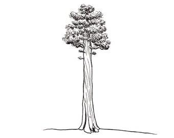 No.211 Tree / Original Artwork / Illustration / Daily Doodle / Art Print / Giant Sequoia Tree Drawing