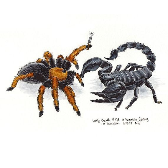 No.138 A tarantula peleando un escorpión / obras de arte | Etsy