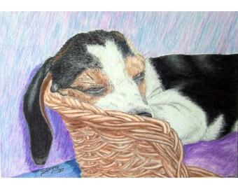 BEAGLE PUPPY Dog Original Drawing by SKJ