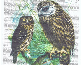 Owls.Bird,Antique French Book Page.Vintage.retro.Birthday Gift.buy 3 get 1 free.mixed media.deco.nursery.child,altered art.avian.feather