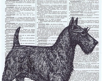 Scotch Terrier.Scotty.Dog.Canine.antique book page print.vintage illustration.paris.french.gift.child.nursery.den.home deco.art.pet.eco.mom
