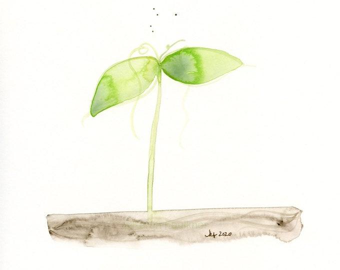 "Original watercolor painting, ""Seedling"""