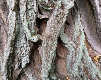 Tree trunk textures free use image stock photo