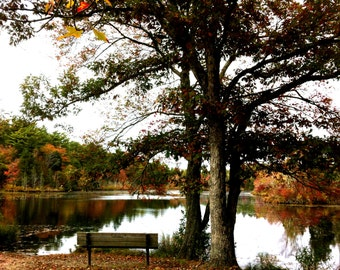 Park bench on pond with fall autumn foliage stock photo image free use