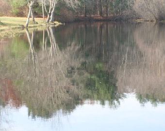Reflection of bare trees in the pond stock photo image free use