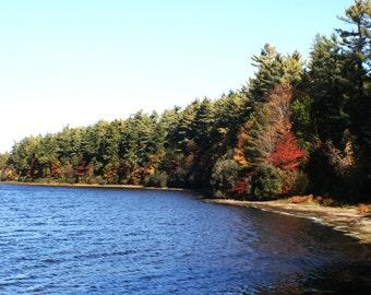 Autumn foliage on pond stock photo image free use